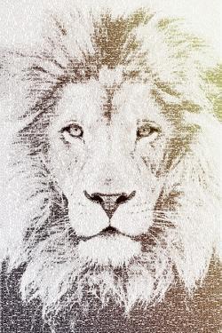 Lion by Paula Belle Flores