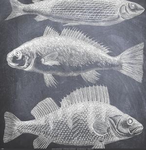 Aquarium by Paula Scaletta