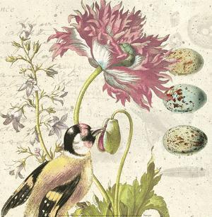 Bird Study 2 by Paula Scaletta