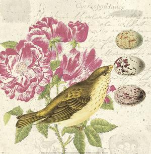 Bird Study 3 by Paula Scaletta