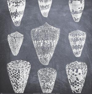 Cone Shells by Paula Scaletta