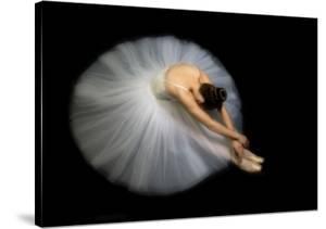 Elegance by Pauline Pentony Ba