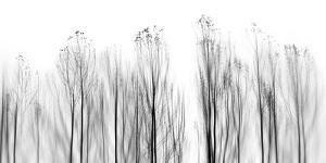 No Grounds by Paulo Abrantes