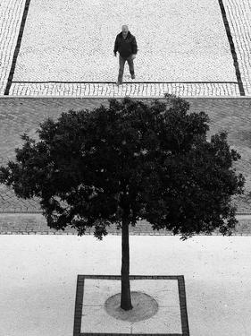 Two Silver Trees by Paulo Abrantes