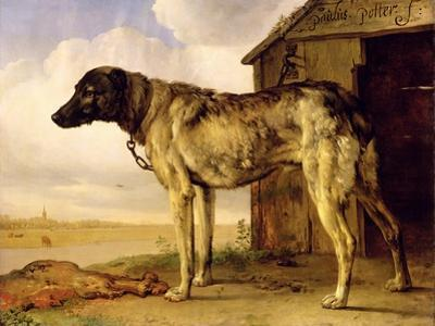 Dog on a Chain, 1653-4 by Paulus Potter