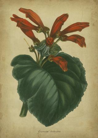 Vermilion Blooms I