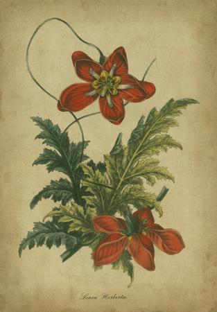 Vermilion Blooms III