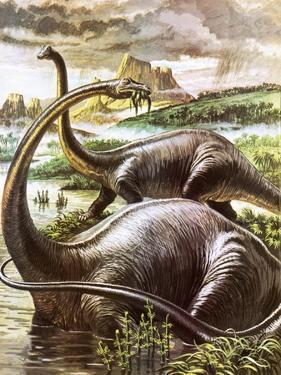 Diplodocus by Payne