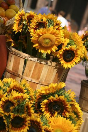 Sunflowers for Sale in Copley Square in Boston Massachusetts by pdb1