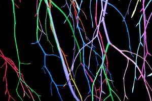 Painted Tree Branches by pea1