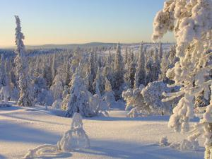 Peaceful Forest Covered in Snow the The Cold Winter in Finland