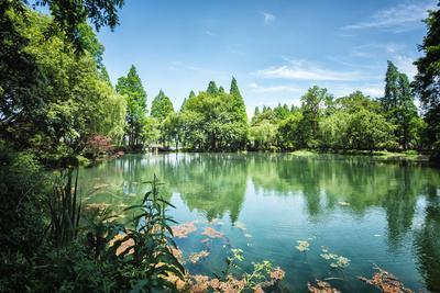 https://imgc.allpostersimages.com/img/posters/peaceful-lake-scene-with-greenery-at-one-of-the-lesser-known-spots-at-west-lake-in-hangzhou_u-L-PWFDNI0.jpg?p=0