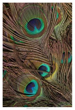 Peacock Feathers IV