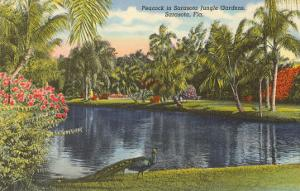 Peacock, Sarasota, Florida
