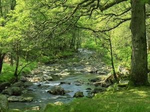 Afon Artro Passing Through Natural Oak Wood, Llanbedr, Gwynedd, Wales, United Kingdom, Europe by Pearl Bucknall