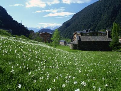 Poet's Narcissus and Tiny Old Church Above Arinsal Village, Arinsal, Andorra, Pyrenees