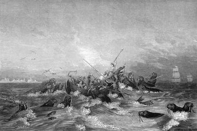 Walrus Hunting, 19th Century