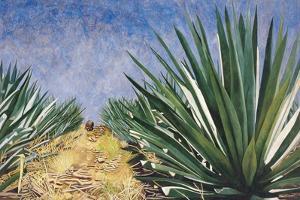 Agaves with Blue Sky, 2004 by Pedro Diego Alvarado