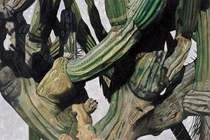 Cardon Cactus in Baja California, 2004 by Pedro Diego Alvarado