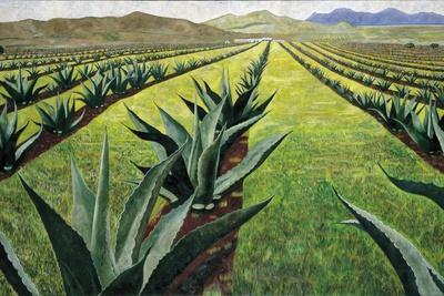 Maguey Plants with Cloudy Sky, 1999