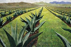 Maguey Plants with Cloudy Sky, 1999 by Pedro Diego Alvarado