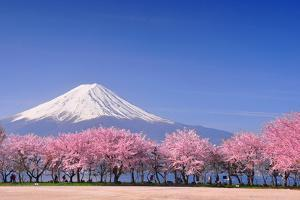 Fuji and Sakura by Peerapat Tandavanitj