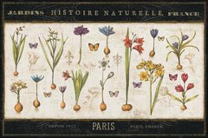 Histoire Naturelle I by Pela Design