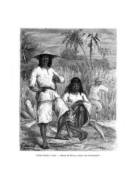 Chinese Workers, Cuba, 19th Century by Pelcoq