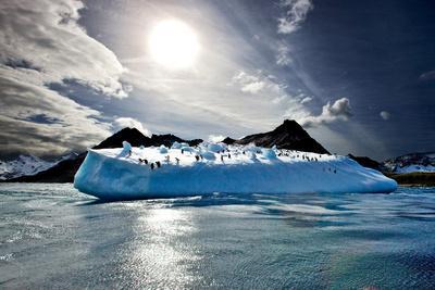 https://imgc.allpostersimages.com/img/posters/penguin-island_u-L-PIIQ0V0.jpg?p=0