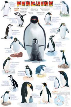 Penguins Chart