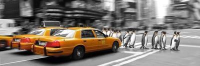 Penguins in New York
