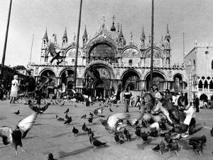 People Feed Pigeons at Saint Marks Square