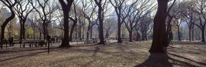 People Relaxing in the Park, Central Park, New York City, New York State, USA