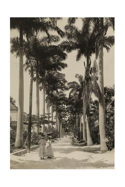 People Walk on a Bridgetown Avenue Lined with Palm Trees