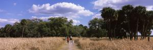 People Walking on a Trail, Myakka River State Park, Sarasota, Florida, USA
