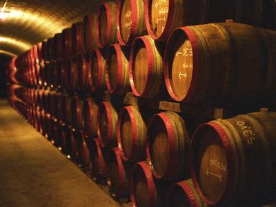 Barrels of Tokaj Wine in Disznoko Cellars, Hungary