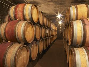 Chapoutier Winery's Barrel Aging Cellar with Oak Casks, Domaine M Chapoutier, Tain L'Hermitage by Per Karlsson