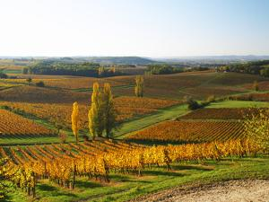 View Over the Vineyards in Bergerac, Chateau Belingard, Bergerac, Dordogne, France by Per Karlsson