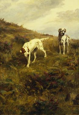 Two Setters Pointing at Quail by Percival L. Rosseau