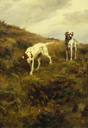 Two Setters Pointing at Quail