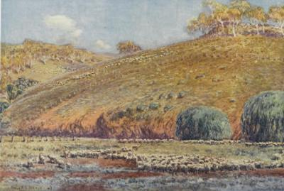 Sheep Run by Percy F.s. Spence