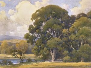 Marin Oaks by Percy Gray