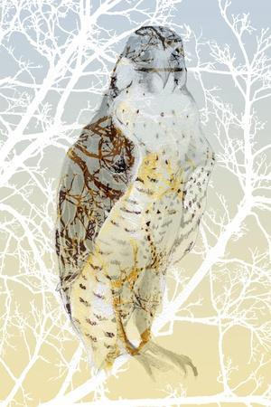 https://imgc.allpostersimages.com/img/posters/peregrine-falcon-2015_u-L-Q1GTURC0.jpg?artPerspective=n