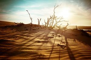 Desert Landscape with Dead Plants in Sand Dunes under Sunny Sky. Global Warming Concept. Nature Bac by Perfect Lazybones