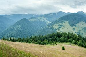 Foggy Morning Landscape with Pine Tree Highland Forest at Carpathian Mountains. Ukraine Destination by Perfect Lazybones