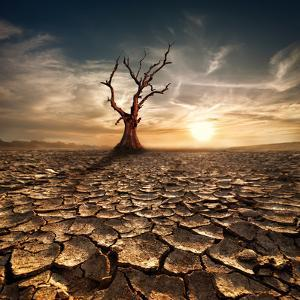 Global Warming Concept. Lonely Dead Tree under Dramatic Evening Sunset Sky at Drought Cracked Deser by Perfect Lazybones
