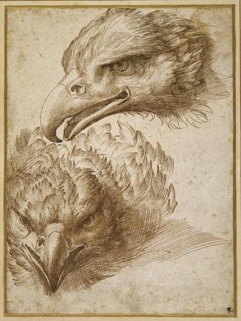 Studies of an Eagle's Head