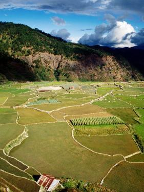 Rice Paddies, Aguid, Philippines by Pershouse Craig