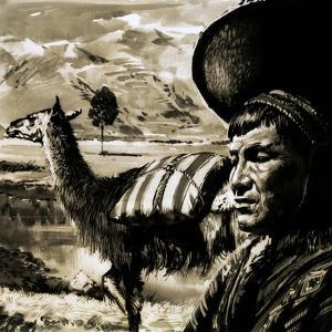 Peruvian Indian and Llama