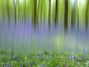 Bluebells in Beech Wood Abstract, Scotland, UK by Pete Cairns